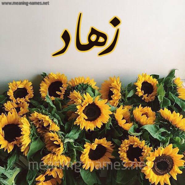 صورة اسم زهاد Zhad شكل 17 صوره دوار الشمس للإسم بخط رقعة
