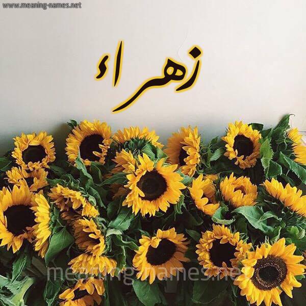 صورة اسم زهراء Zhraa شكل 17 صوره دوار الشمس للإسم بخط رقعة