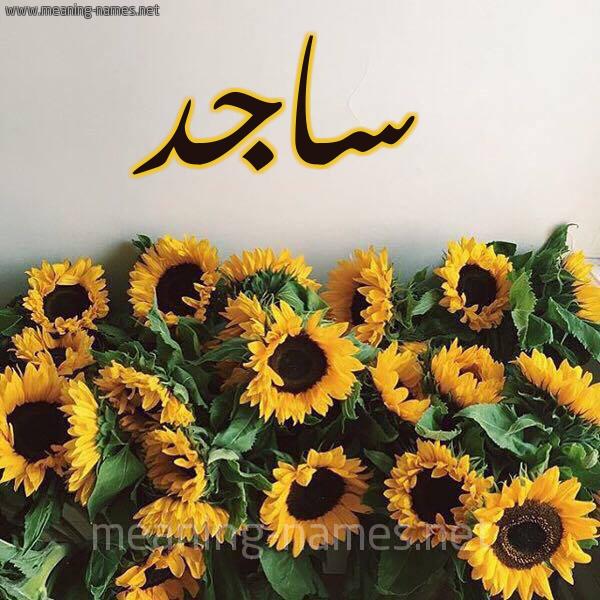 صورة اسم ساجد Sagd شكل 17 صوره دوار الشمس للإسم بخط رقعة