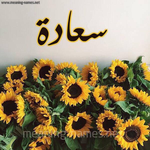 صورة اسم سعادة Saada شكل 17 صوره دوار الشمس للإسم بخط رقعة