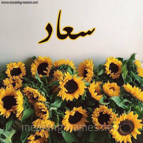 صورة اسم سعاد Soaad شكل 17 صوره دوار الشمس للإسم بخط رقعة