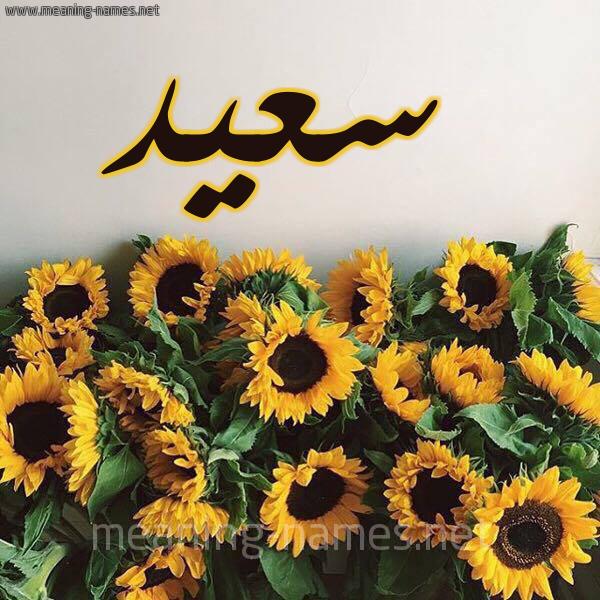 صورة اسم سعيد Saeed شكل 17 صوره دوار الشمس للإسم بخط رقعة