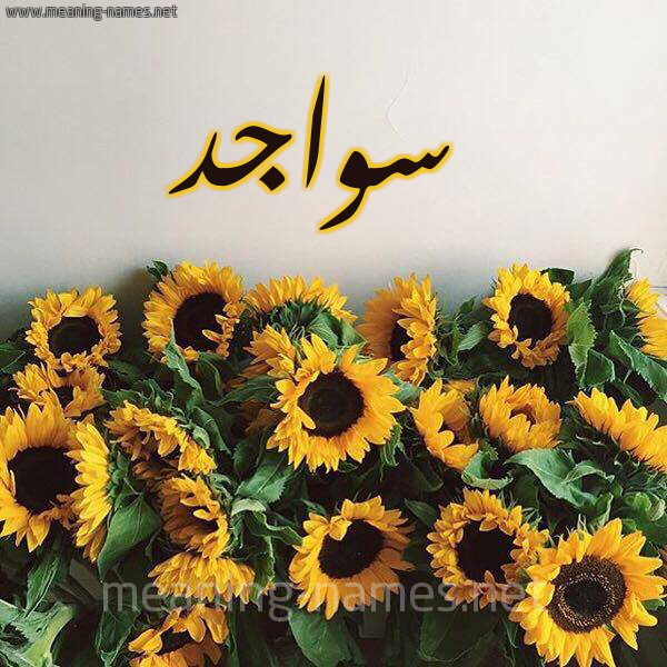 صورة اسم سواجد Swajd شكل 17 صوره دوار الشمس للإسم بخط رقعة