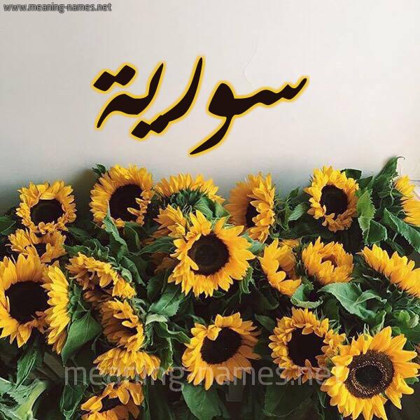 صورة اسم سورية SORIH شكل 17 صوره دوار الشمس للإسم بخط رقعة