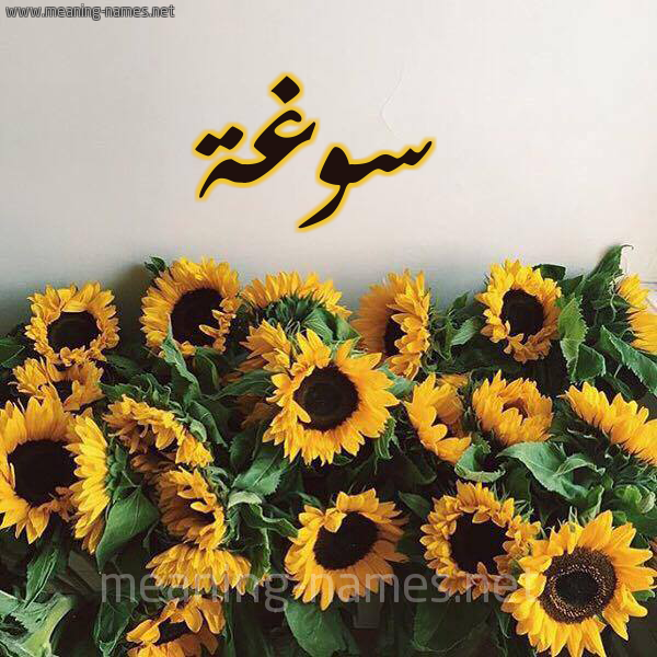 صورة اسم سوغة Swghh شكل 17 صوره دوار الشمس للإسم بخط رقعة