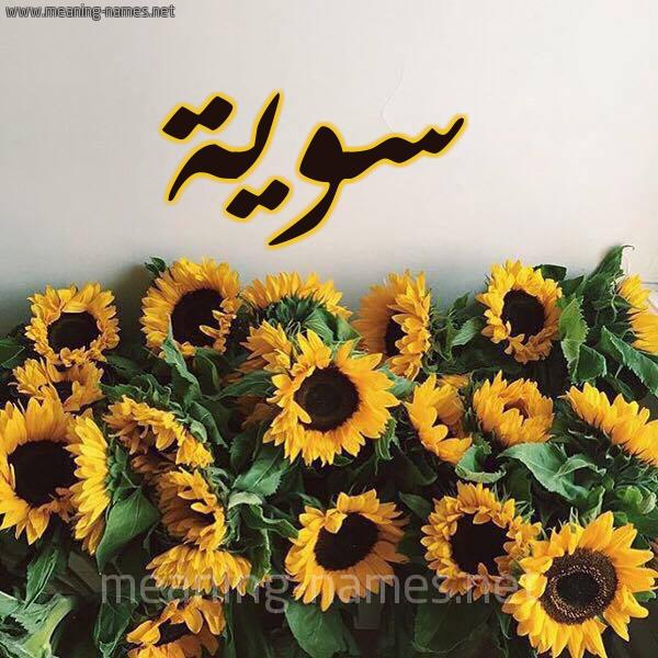 صورة اسم سوية Swyh شكل 17 صوره دوار الشمس للإسم بخط رقعة