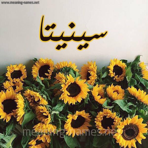 صورة اسم سينيتا Cinta شكل 17 صوره دوار الشمس للإسم بخط رقعة