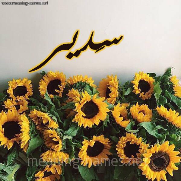 صورة اسم سَدير Sadir شكل 17 صوره دوار الشمس للإسم بخط رقعة