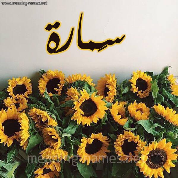 صورة اسم سَمارة SAMARH شكل 17 صوره دوار الشمس للإسم بخط رقعة