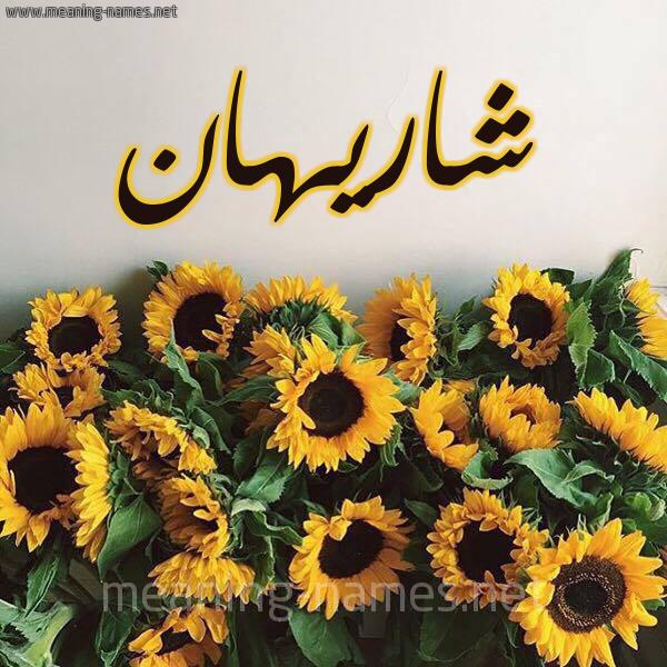 شكل 17 صوره دوار الشمس للإسم بخط رقعة صورة اسم شاريهان SHARIHAN