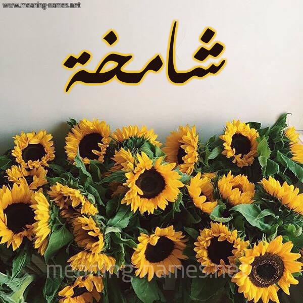 صورة اسم شامخة Shamkhh شكل 17 صوره دوار الشمس للإسم بخط رقعة