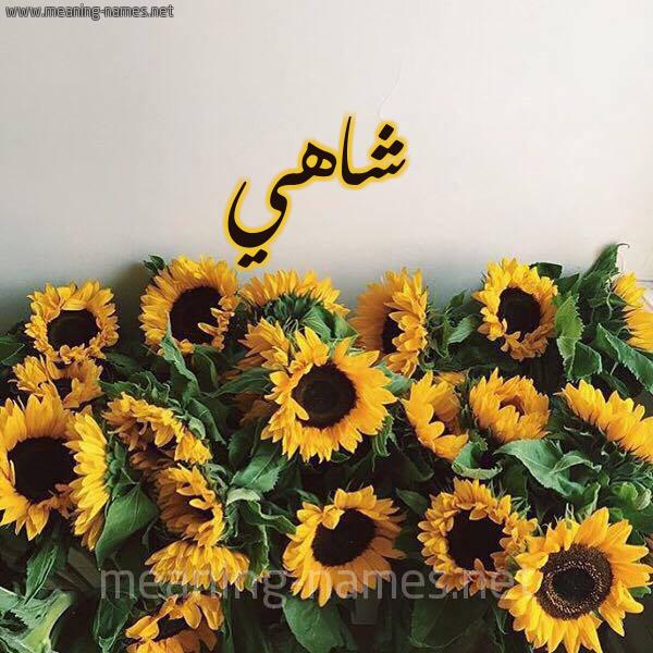 صورة اسم شاهي Shahi شكل 17 صوره دوار الشمس للإسم بخط رقعة