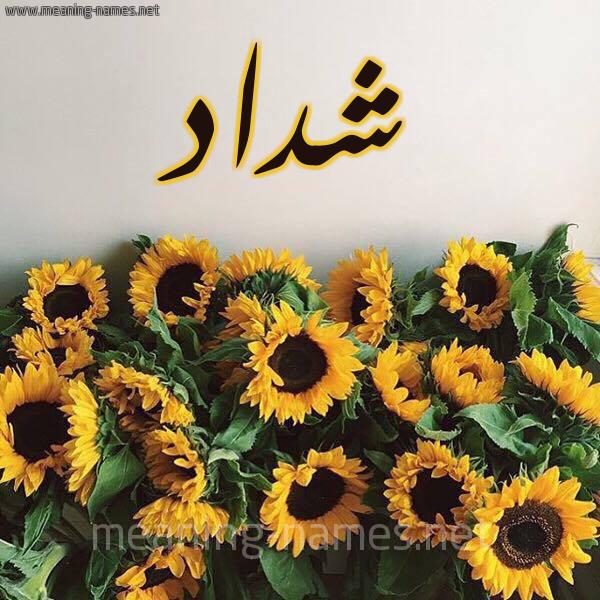صورة اسم شداد Shdad شكل 17 صوره دوار الشمس للإسم بخط رقعة