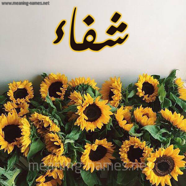 صورة اسم شفاء Sehfaa شكل 17 صوره دوار الشمس للإسم بخط رقعة