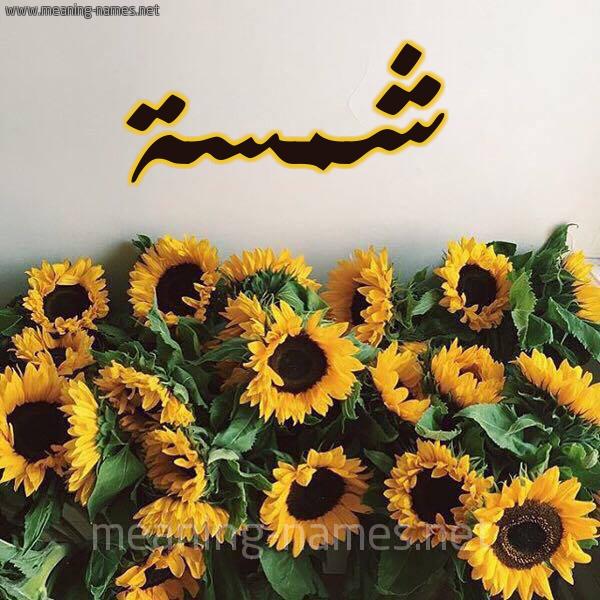 صورة اسم شمسة Shmsa شكل 17 صوره دوار الشمس للإسم بخط رقعة