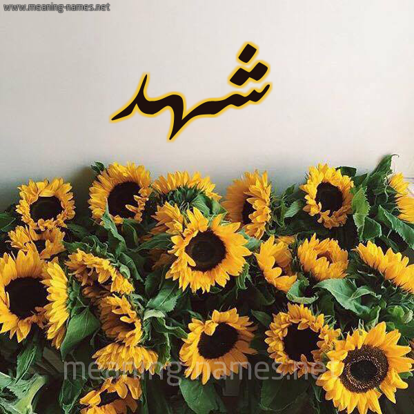 صورة اسم شهد Shahd شكل 17 صوره دوار الشمس للإسم بخط رقعة