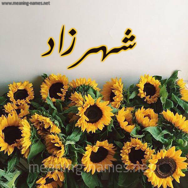 صورة اسم شهرزاد Chhrzad شكل 17 صوره دوار الشمس للإسم بخط رقعة