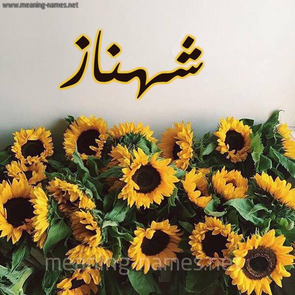 صورة اسم شهناز Shahnaz شكل 17 صوره دوار الشمس للإسم بخط رقعة