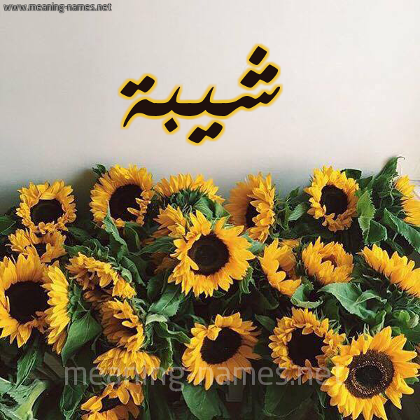 صورة اسم شيبة Shybh شكل 17 صوره دوار الشمس للإسم بخط رقعة