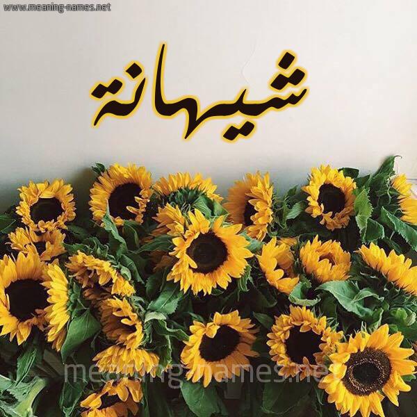 صورة اسم شيهانة Shyhanh شكل 17 صوره دوار الشمس للإسم بخط رقعة