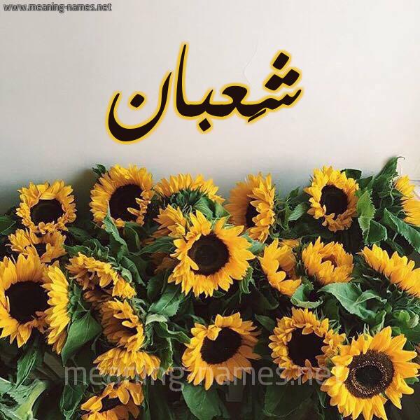 صورة اسم شَعبان SHAABAN شكل 17 صوره دوار الشمس للإسم بخط رقعة