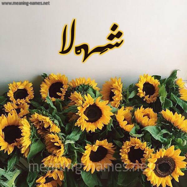 صورة اسم شَهْلا SHAHLA شكل 17 صوره دوار الشمس للإسم بخط رقعة
