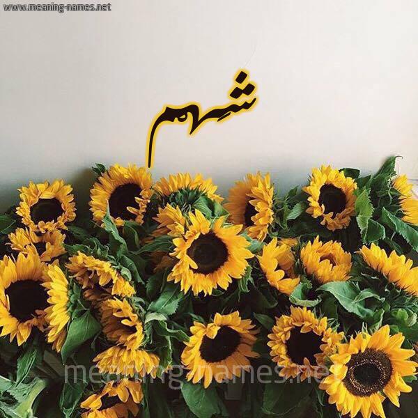 صورة اسم شَهْم SHAHM شكل 17 صوره دوار الشمس للإسم بخط رقعة