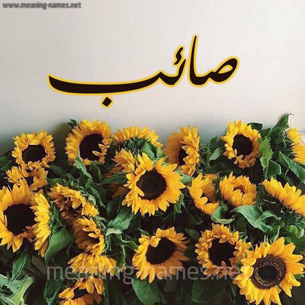 صورة اسم صائب SAEB شكل 17 صوره دوار الشمس للإسم بخط رقعة
