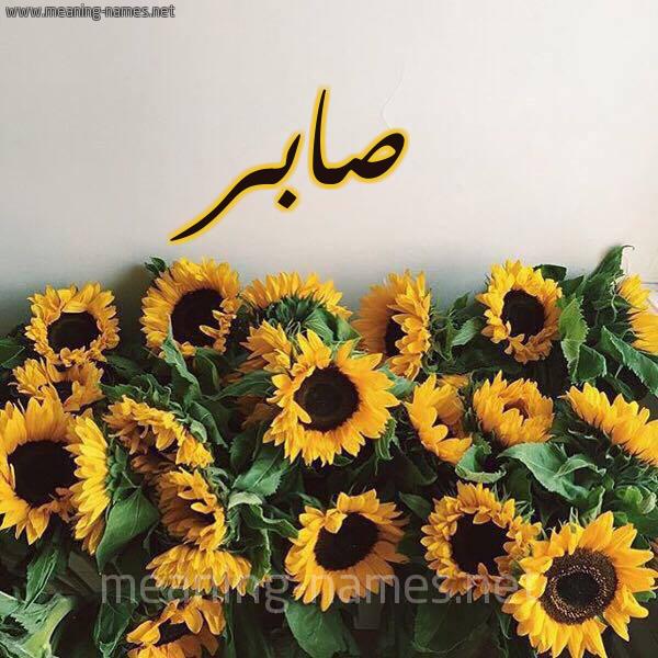 صورة اسم صابر Sabr شكل 17 صوره دوار الشمس للإسم بخط رقعة