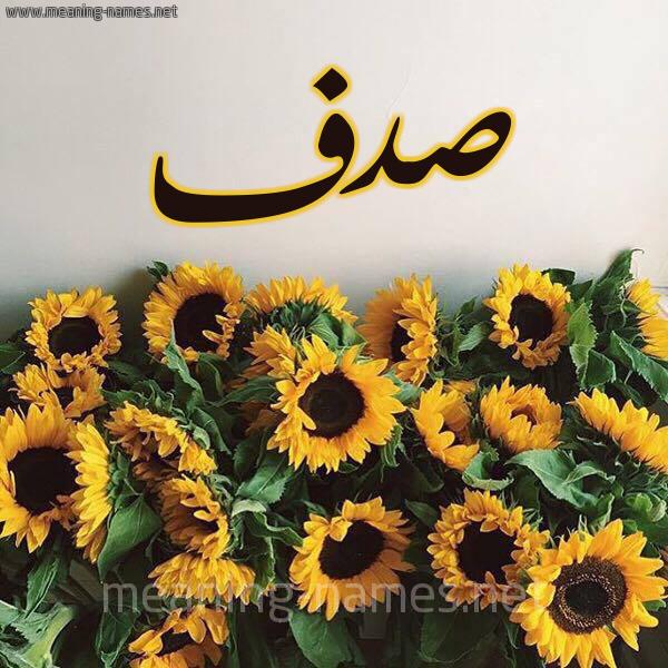 صورة اسم صدف Sadaf شكل 17 صوره دوار الشمس للإسم بخط رقعة