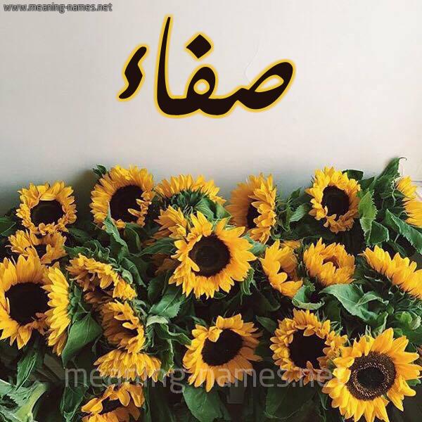 صورة اسم صفاء Sfaa شكل 17 صوره دوار الشمس للإسم بخط رقعة
