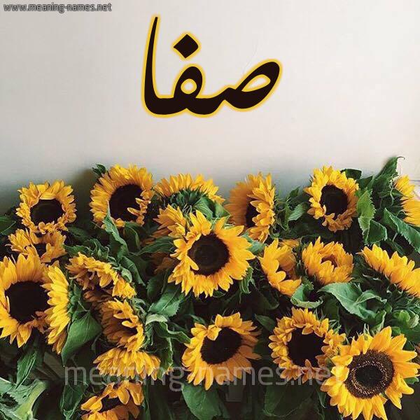 صورة اسم صفا Safa شكل 17 صوره دوار الشمس للإسم بخط رقعة