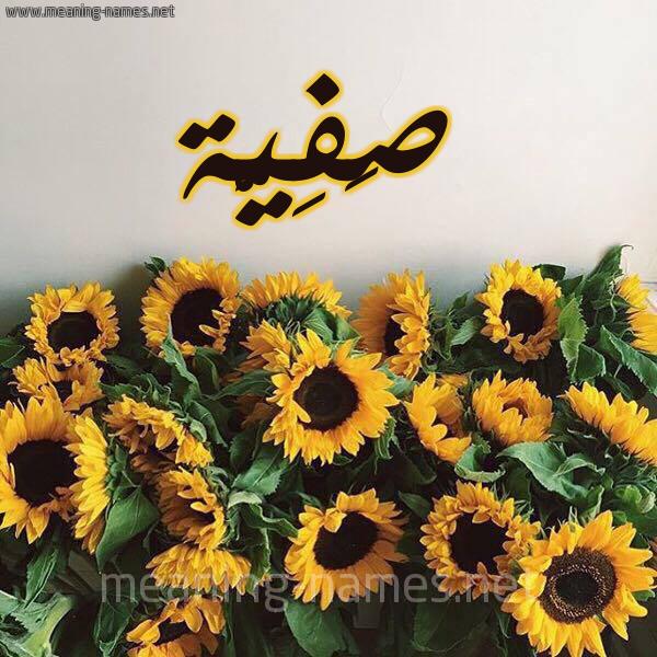 صورة اسم صَفِيَّة Safia شكل 17 صوره دوار الشمس للإسم بخط رقعة