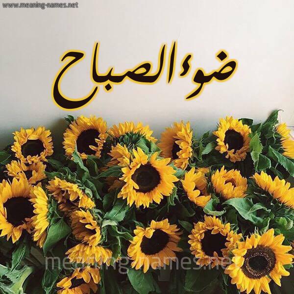 صورة اسم ضوءالصباح Dw'aalsbah شكل 17 صوره دوار الشمس للإسم بخط رقعة