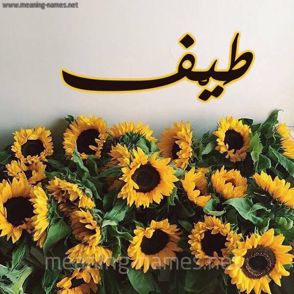 صورة اسم طَيْف TAIF شكل 17 صوره دوار الشمس للإسم بخط رقعة