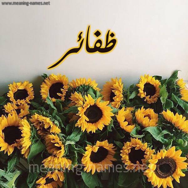 صورة اسم ظفائر Zfa'ir شكل 17 صوره دوار الشمس للإسم بخط رقعة