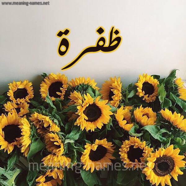صورة اسم ظفرة Zfrh شكل 17 صوره دوار الشمس للإسم بخط رقعة