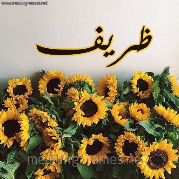 صورة اسم ظَريف ZARIF شكل 17 صوره دوار الشمس للإسم بخط رقعة