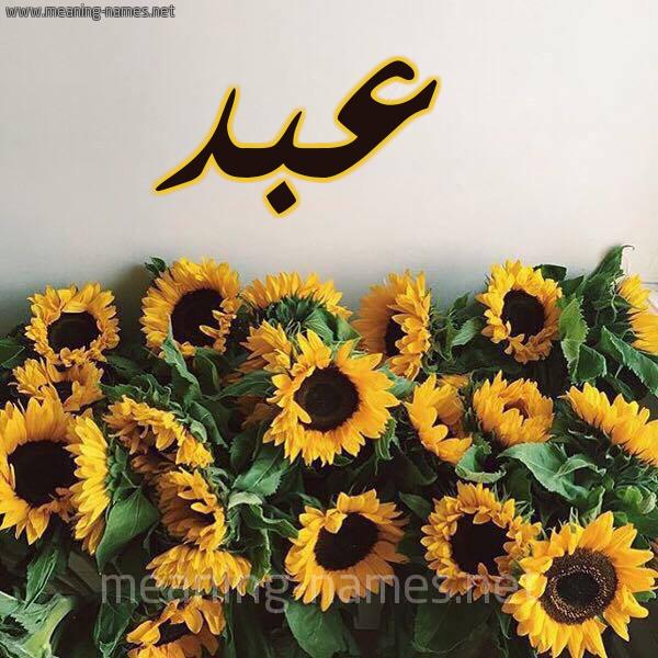 صورة اسم عبد Abd شكل 17 صوره دوار الشمس للإسم بخط رقعة