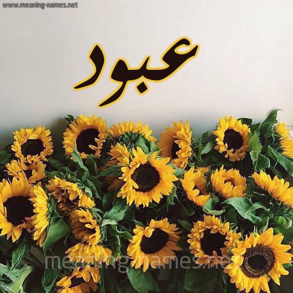 شكل 17 صوره دوار الشمس للإسم بخط رقعة صورة اسم عبود Abod