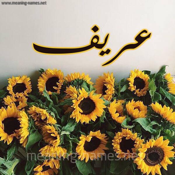 صورة اسم عريف Aryf شكل 17 صوره دوار الشمس للإسم بخط رقعة