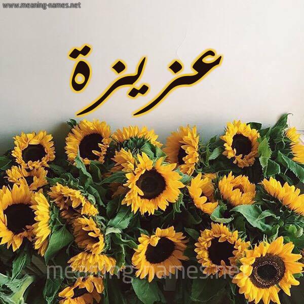 صورة اسم عزيزة Azyzh شكل 17 صوره دوار الشمس للإسم بخط رقعة