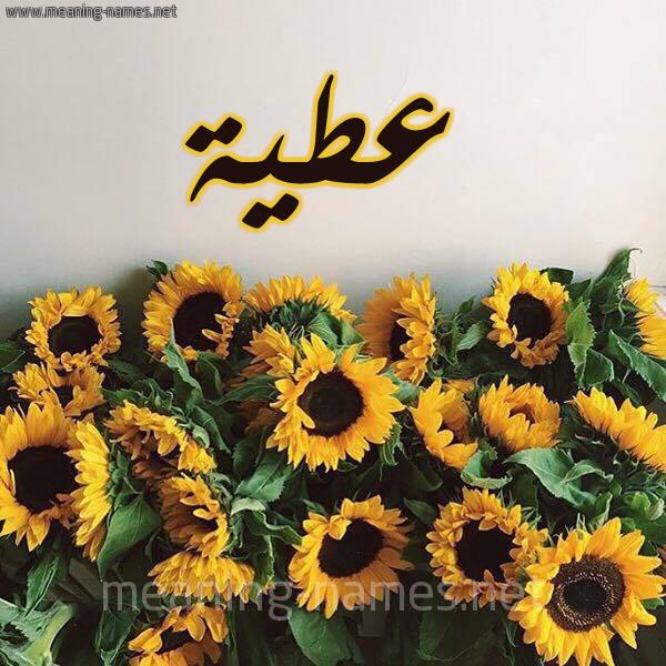صورة اسم عطية Atya شكل 17 صوره دوار الشمس للإسم بخط رقعة