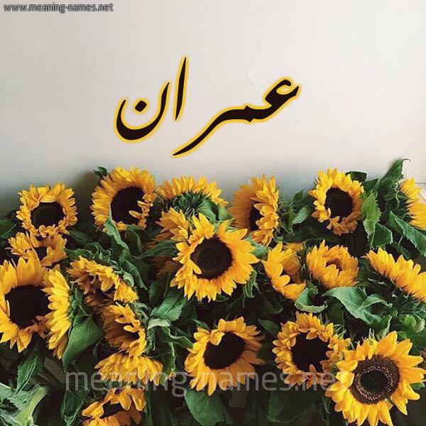 صورة اسم عمران Amran شكل 17 صوره دوار الشمس للإسم بخط رقعة
