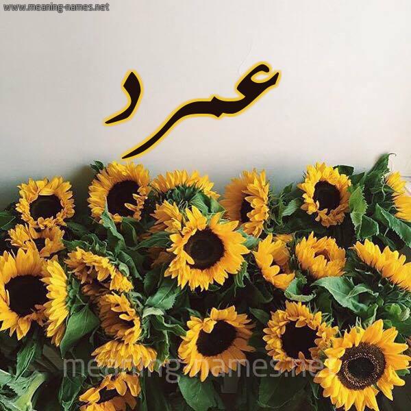 صورة اسم عمرد Amrd شكل 17 صوره دوار الشمس للإسم بخط رقعة
