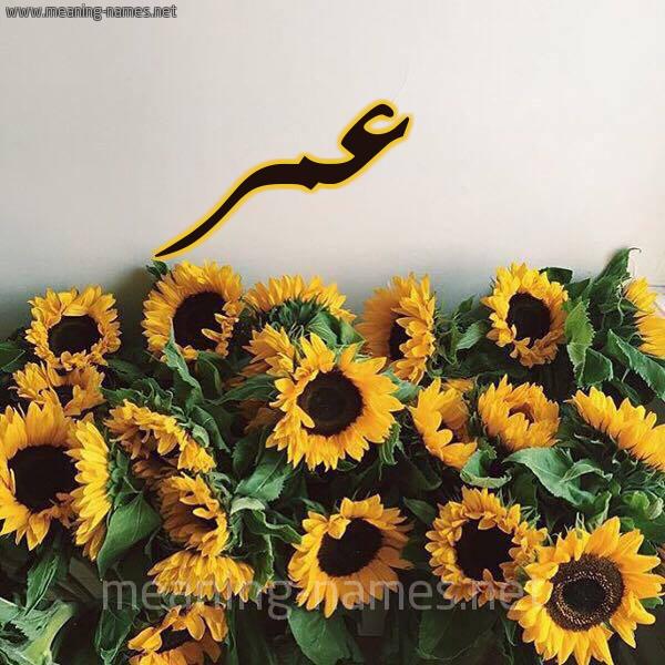 صورة اسم عمر Omar شكل 17 صوره دوار الشمس للإسم بخط رقعة