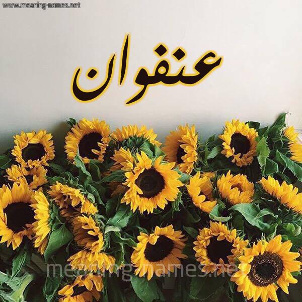 صورة اسم عنفوان Anfwan شكل 17 صوره دوار الشمس للإسم بخط رقعة