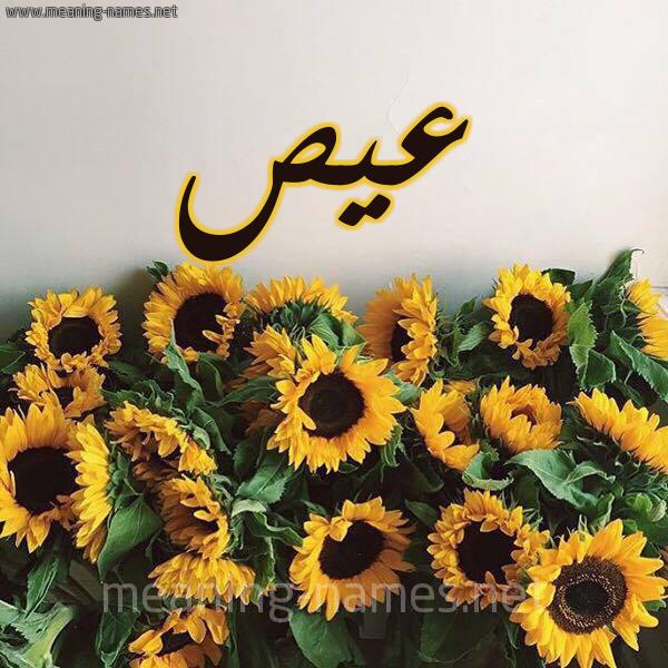 صورة اسم عيص Ays شكل 17 صوره دوار الشمس للإسم بخط رقعة