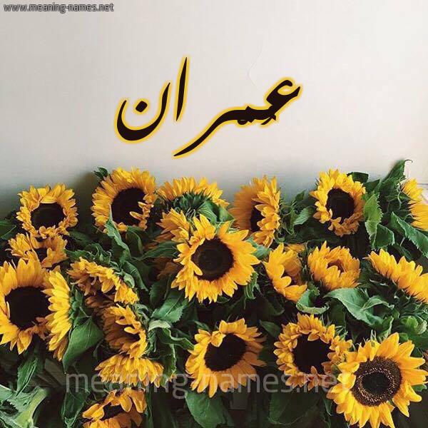 صورة اسم عُمْران omran شكل 17 صوره دوار الشمس للإسم بخط رقعة