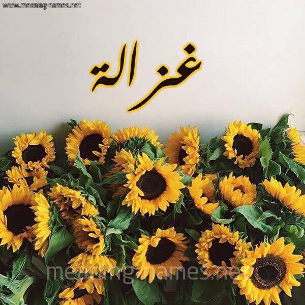 صورة اسم غزالة Ghzalh شكل 17 صوره دوار الشمس للإسم بخط رقعة